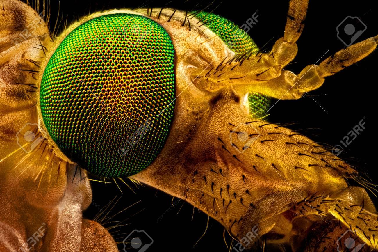 cara de mosca microscopio
