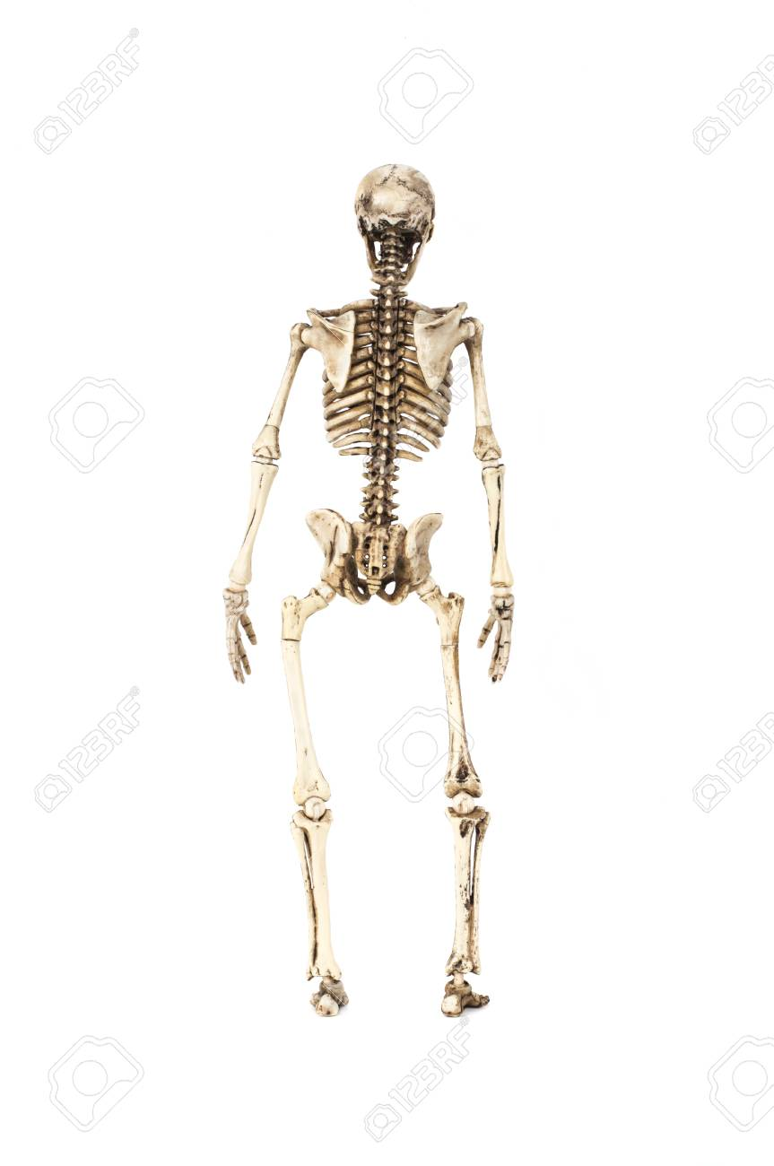Full Length Portrait Of Human Skeleton Isolated On White Background