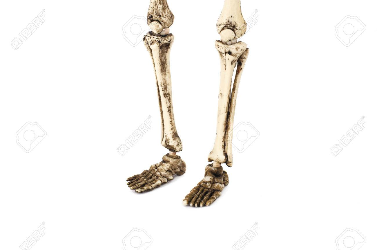 Old Skeleton Feet Isolated On White Background Stock Photo Picture