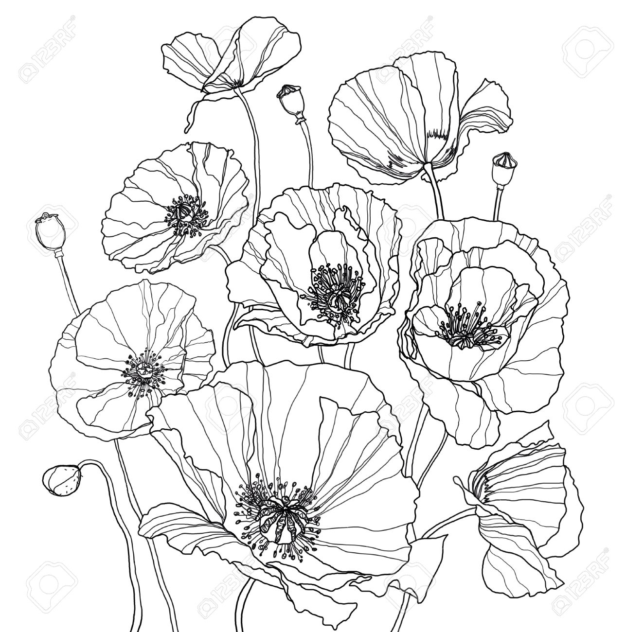 coloring page with poppies it is a big raster image stock photo