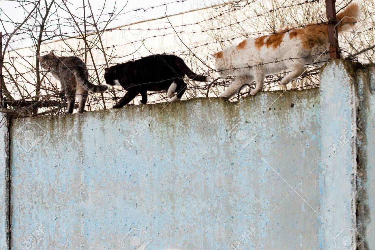 Cat Sitting On A Concrete Fence Of Barbed Wire Stock Photo, Picture ...