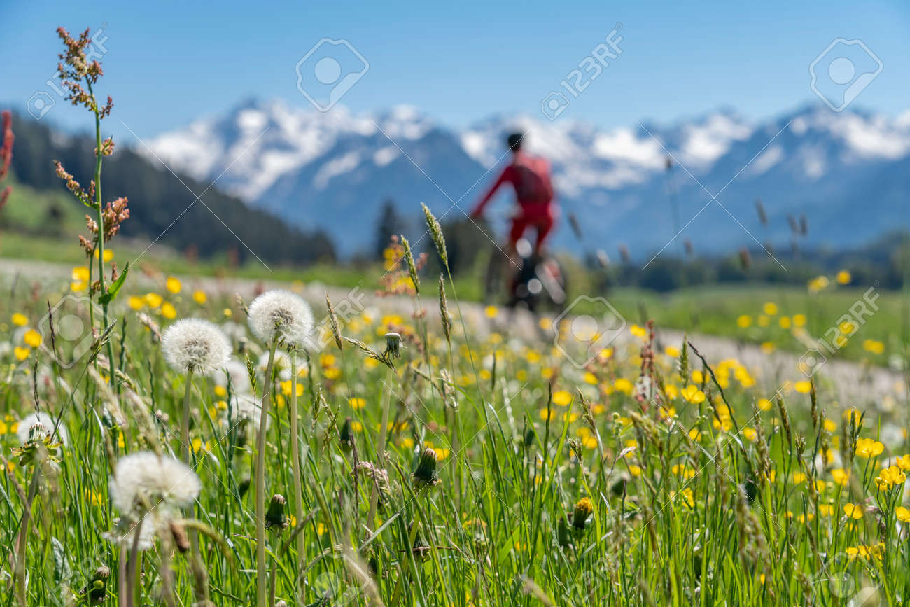 pretty senior woman riding her electric mountain on warm spring day with snoe capped bike in the Iller valley near Oberstdorf with snoe capped Allgau High Alps in background, Allgau Alps, Bavaria, - 165875136