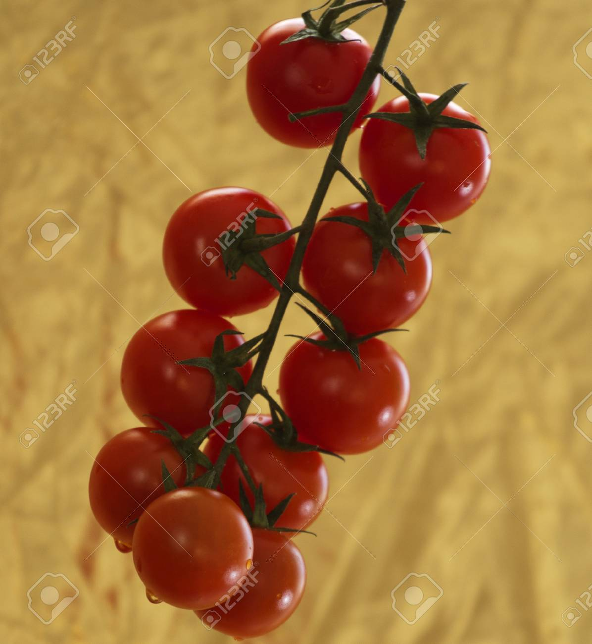 cherry tomatoes on a branch Stock Photo - 17587595