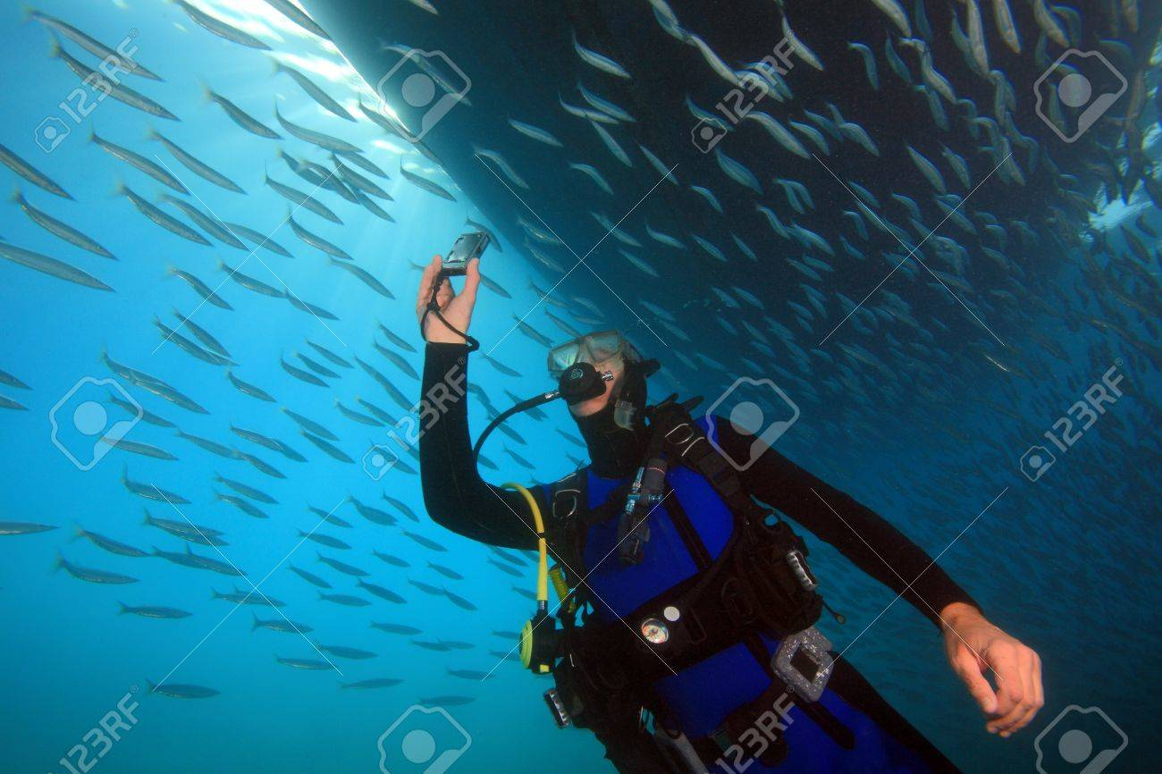 Diving in the Red Sea - 10107213