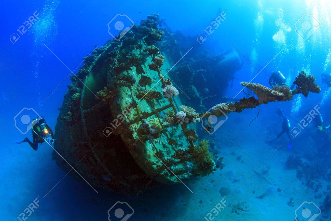 Diving in the Red Sea - 10107222