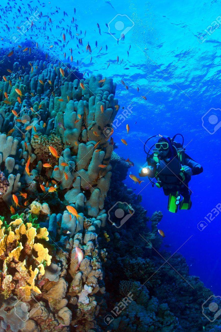 Marine Life in the Red Sea - 16845004