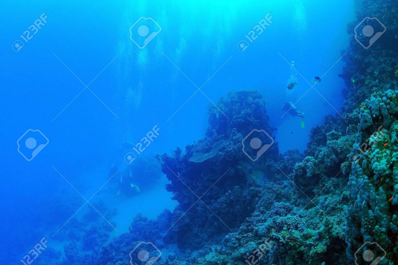 Marine Life in the Red Sea - 16845092