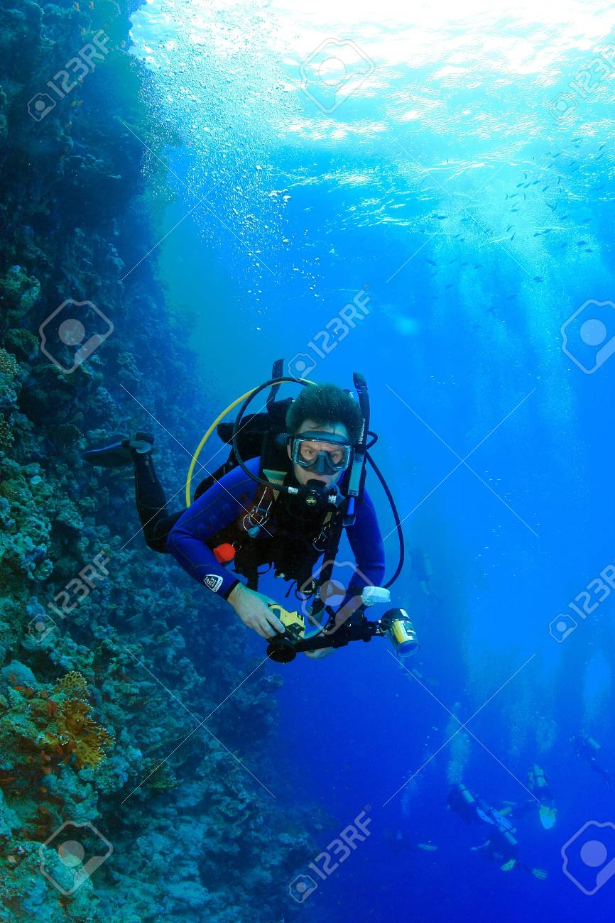 Marine Life in the Red Sea - 16845054
