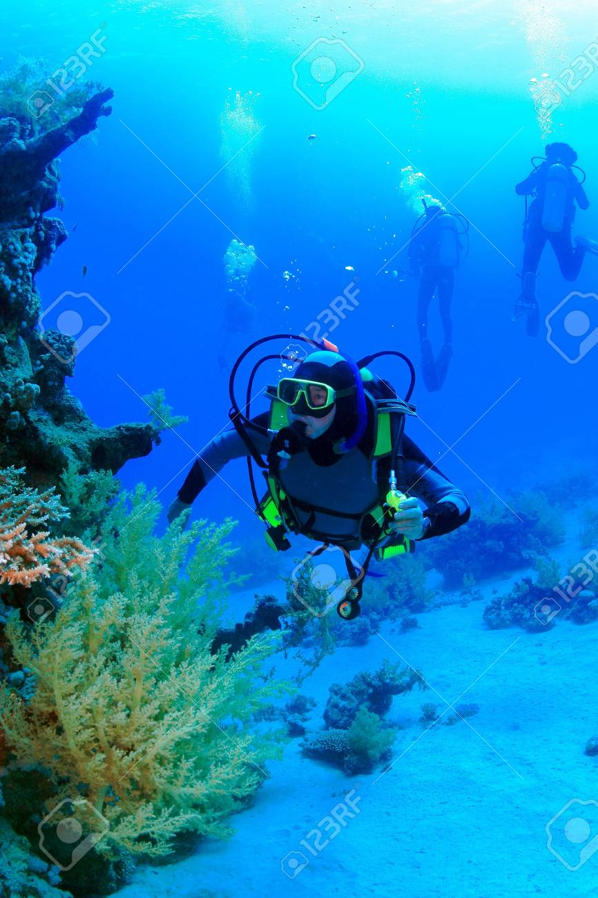 Marine Life in the Red Sea - 16844999