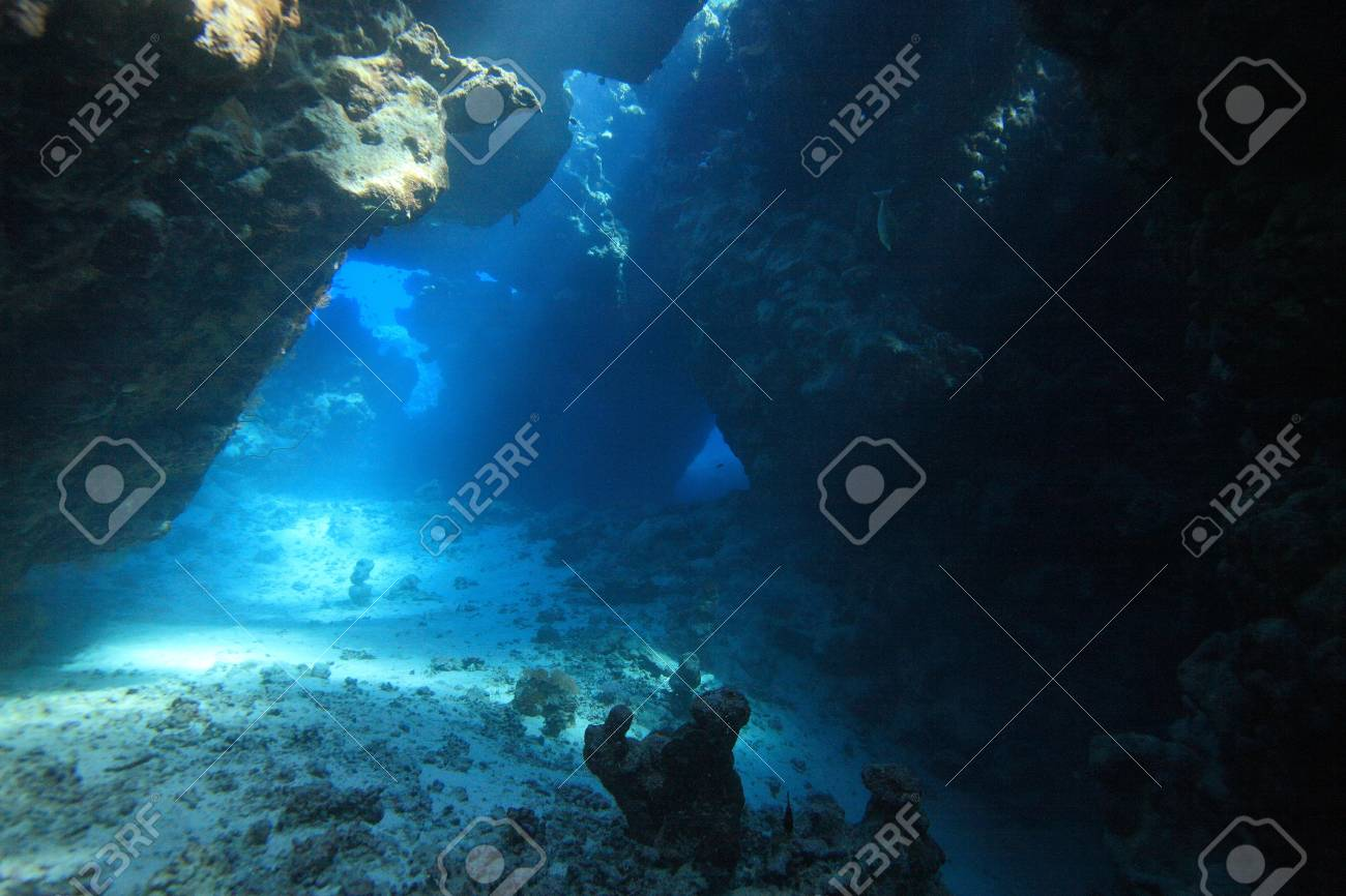 Marine Life in the Red Sea - 16845393