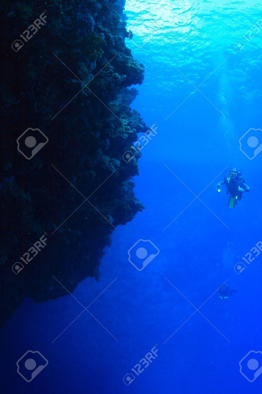 Marine Life in the Red Sea - 16844931