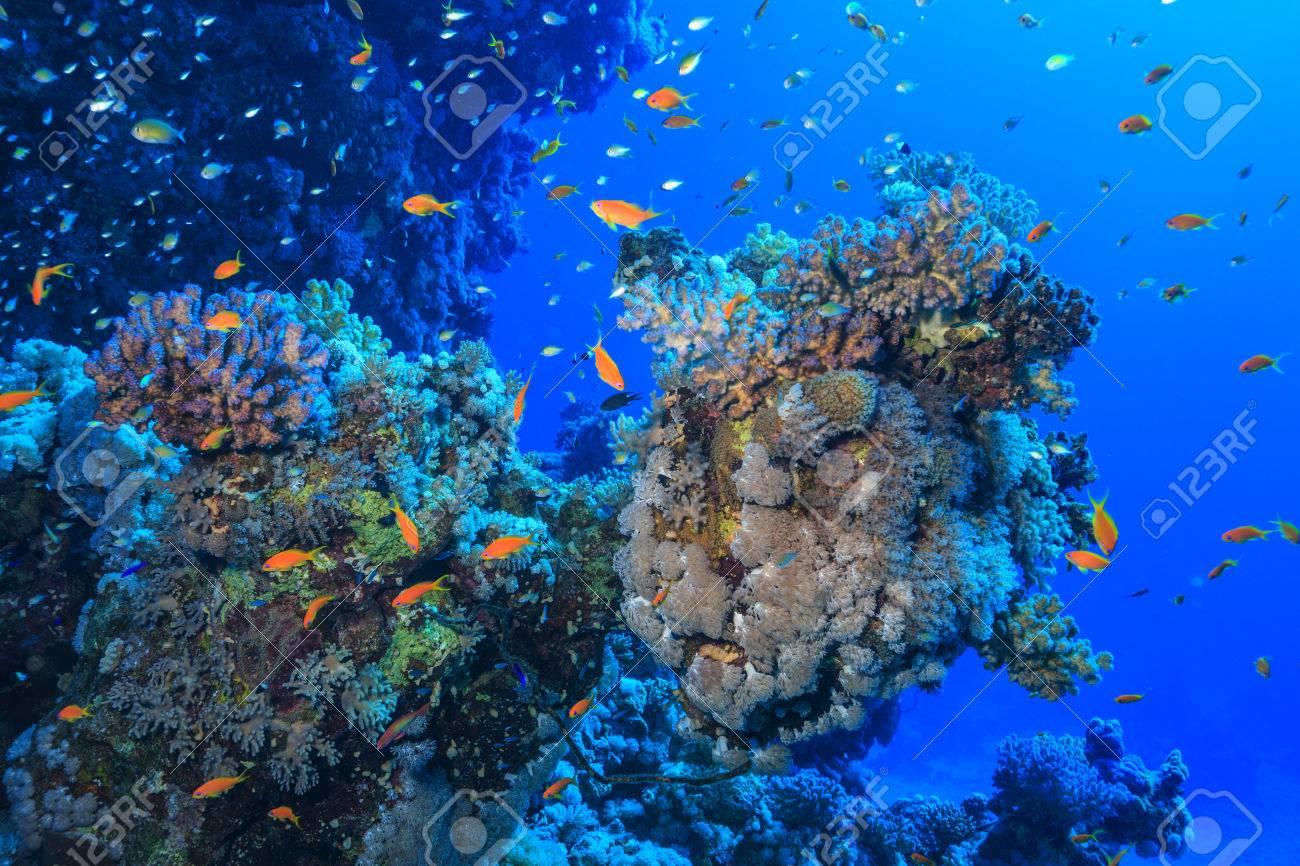 coral reef - 34336027