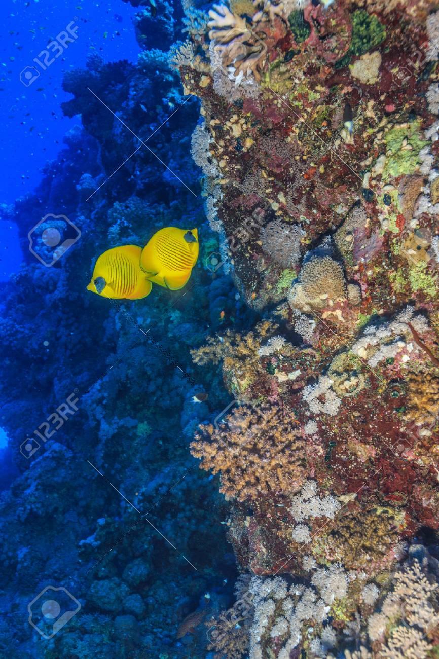coral reef - 34336031