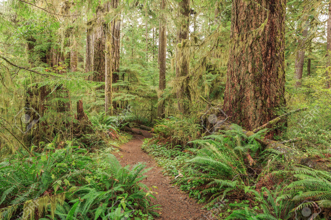 Quinault Rainforest, Olympic National Park, USA - 168138000