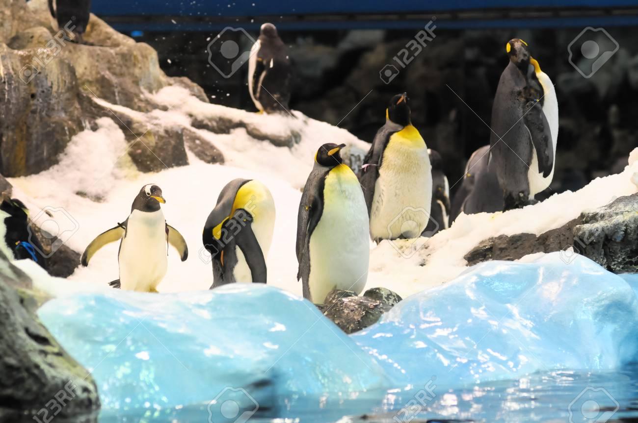 Magnífico Páginas De Pingüino De Club Para Niñas Elaboración ...