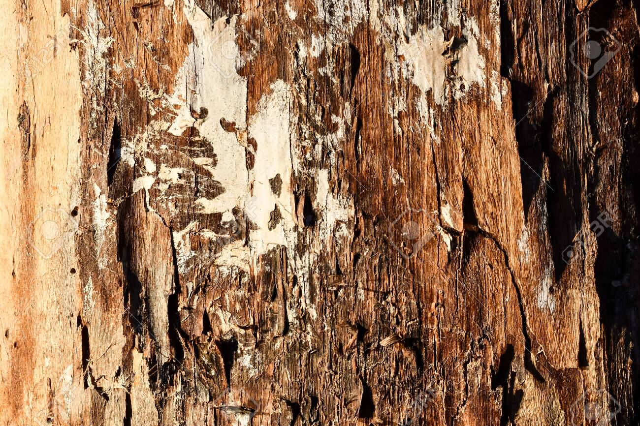 bark of a tree, photo as a background, digital image - 137744599