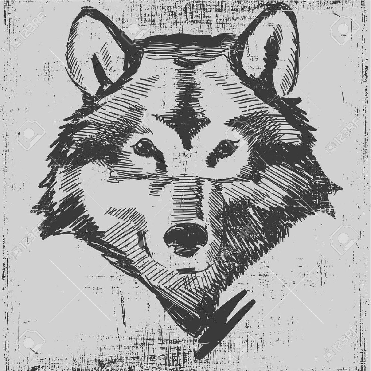 Wolf Head: Wolf Head Hand Drawn Sketch Grunge Texture Engraving Style  Illustration