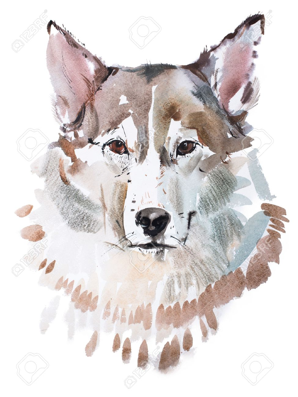 Aquarelle Painting Of Grey Dog Head Wolf S Face Watercolor Drawing