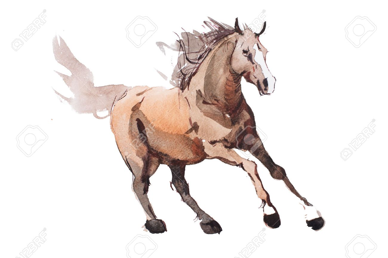 Watercolor Painting Of Galloping Horse Free Running Mustang Stock Photo Picture And Royalty Free Image Image 55651449