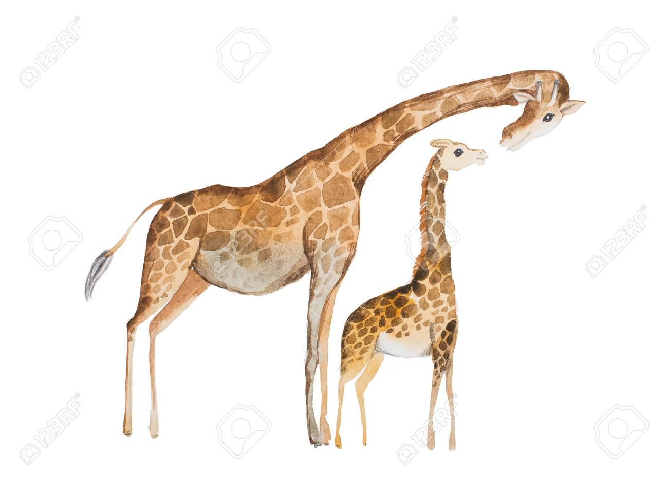 Watercolor illustration of giraffe mother and baby - 80694365