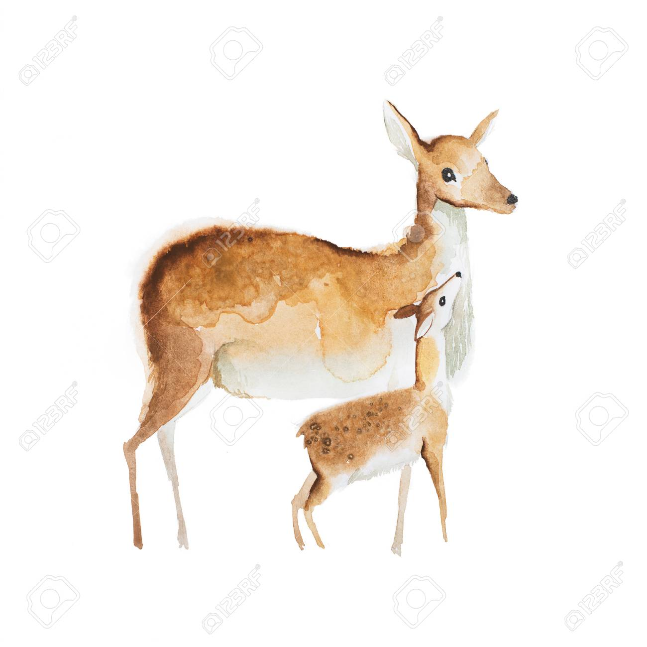 watercolor drawing of mother deer and a fawn stock photo picture