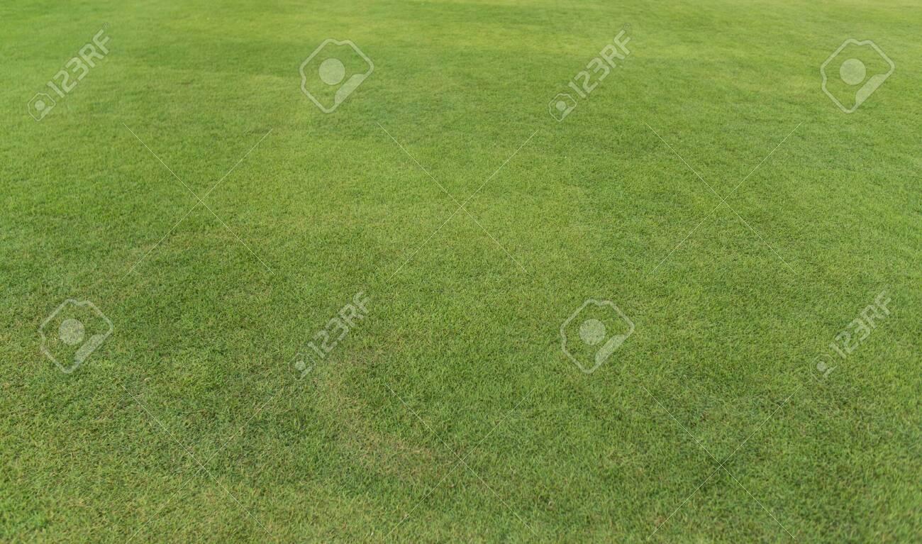 Field of fresh green grass texture. Background - 129107683