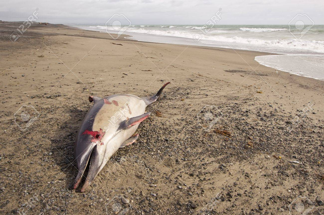 打ち上げ イルカ