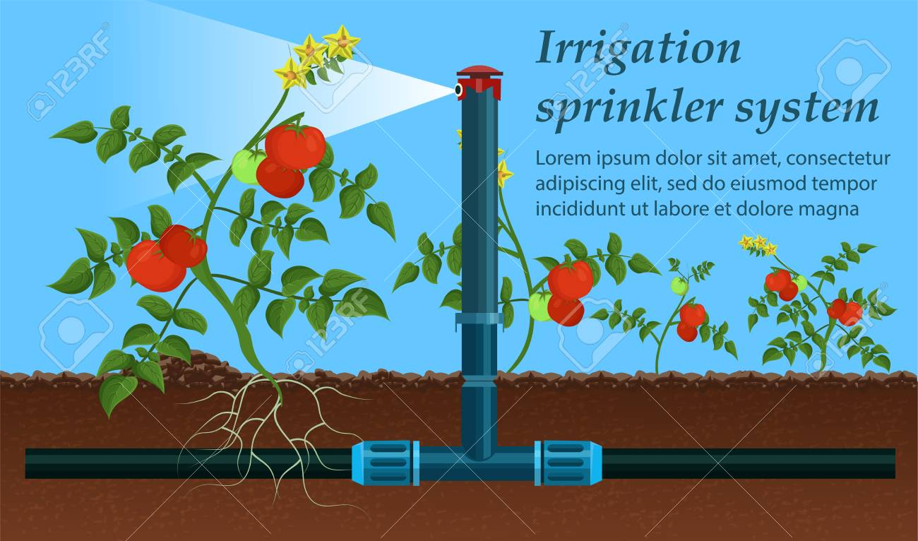Vector is Written Irrigation Sprinkler System  Tool Used Agriculture