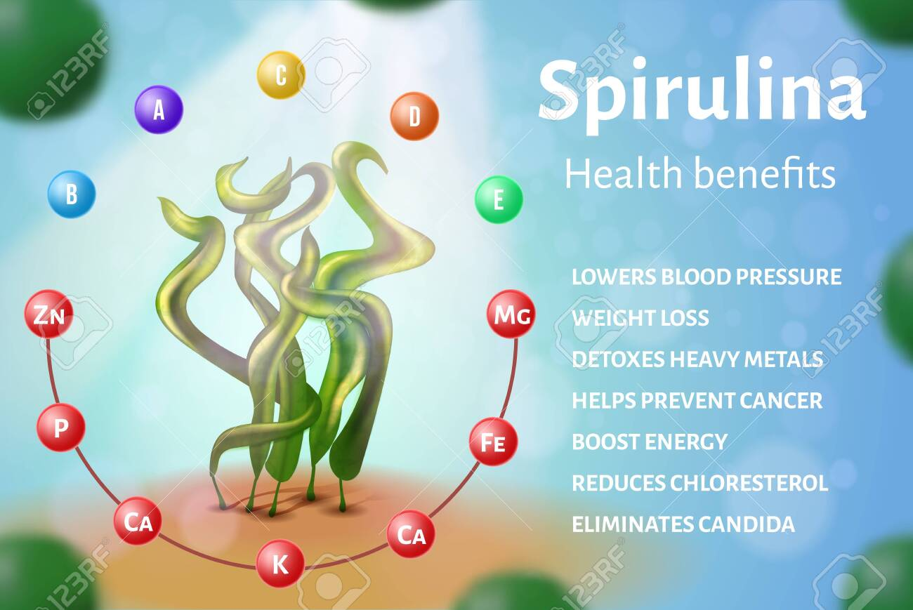 Realistic Raw Spirulina Seaweed Banner Algae Cyanobacteria Health Royalty Free Cliparts Vectors And Stock Illustration Image 130455981