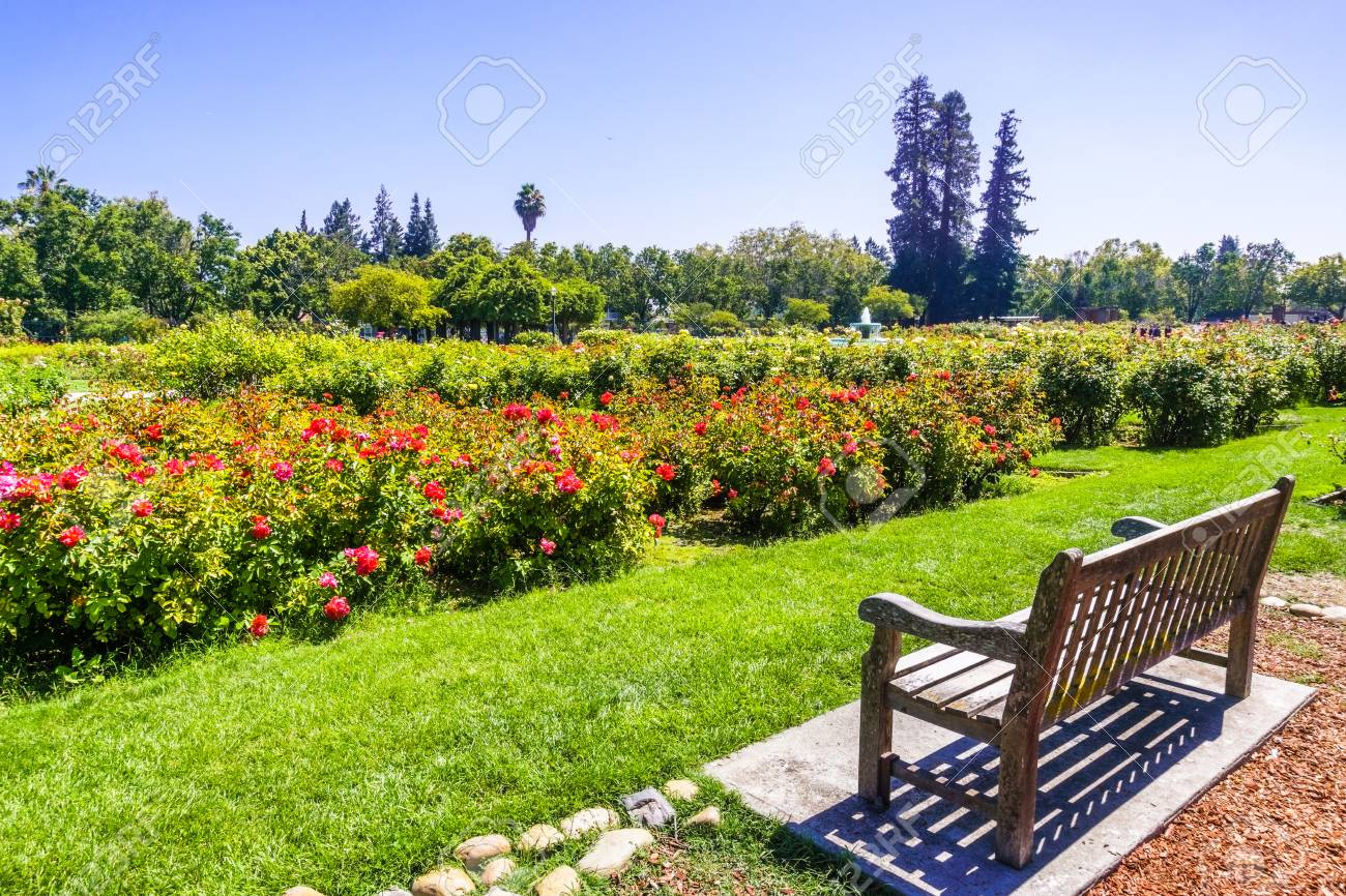 Landscape In The Municipal Rose Garden San Jose South San Francisco Stock Photo Picture And Royalty Free Image Image 113304252