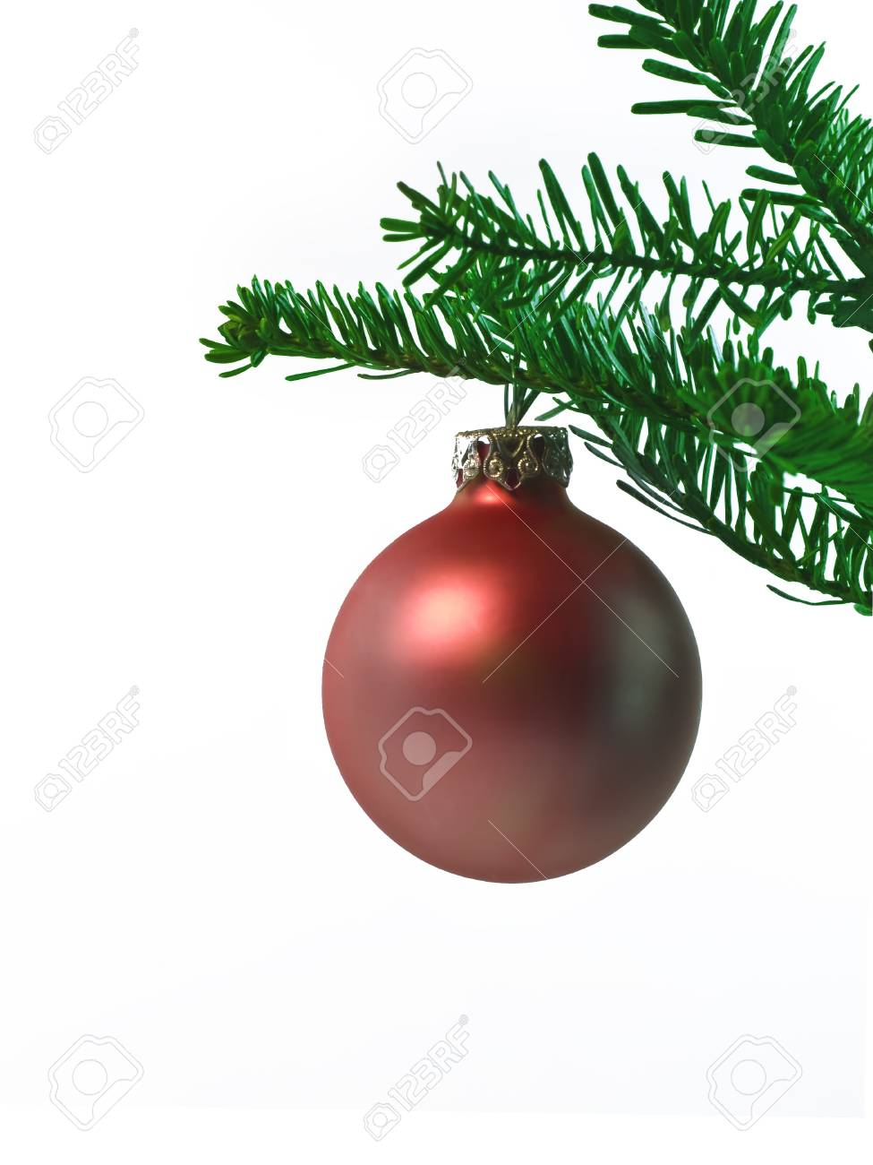 red christmas ball hanging on a branch Stock Photo - 10930563