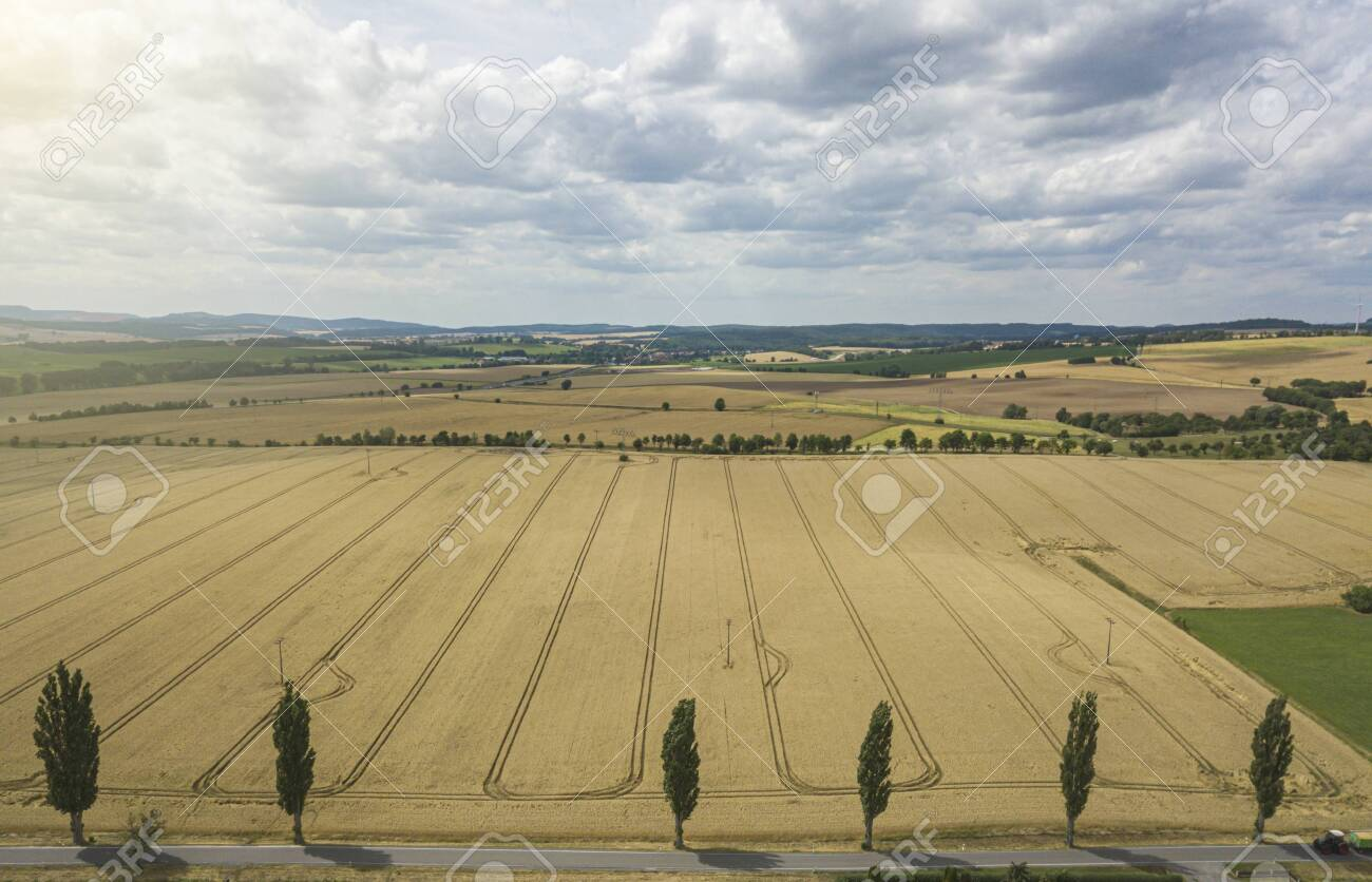 Aerial view of a yellow crops field on a sunny day - 132456081