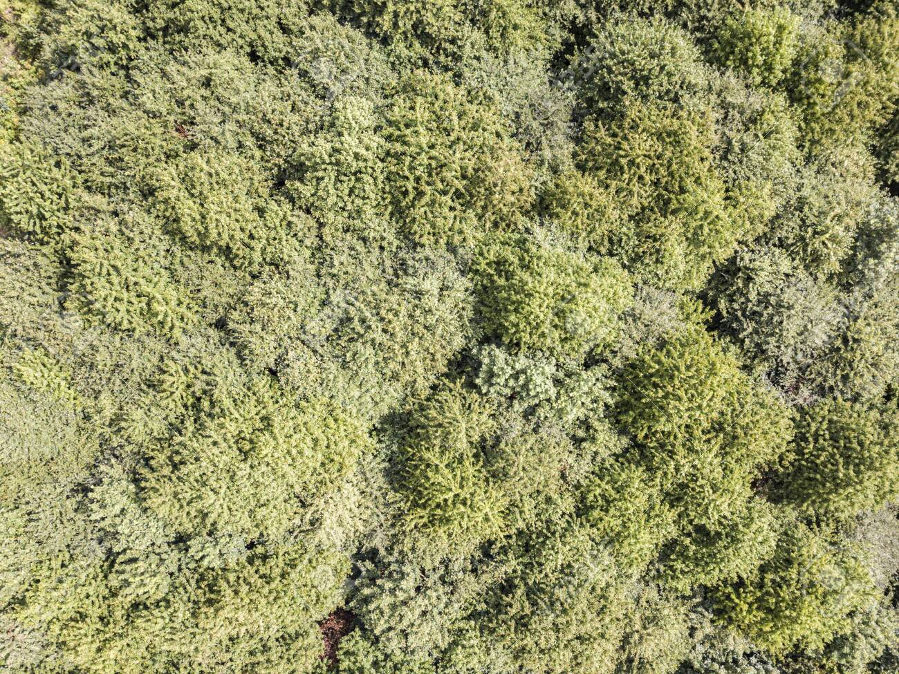 Tree tops seen from above, drone shot - 132455738