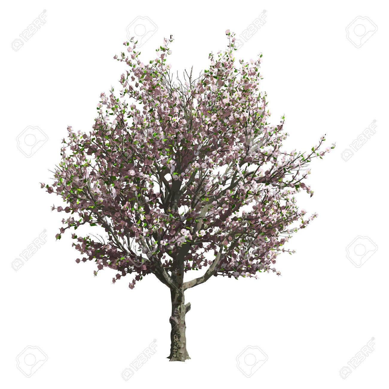 apple tree isolated vector apple tree silhouette vector
