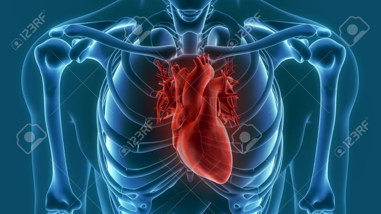 Heart Organ Pain 3d Animation 3d Rendering Stock Photo, Picture And ...