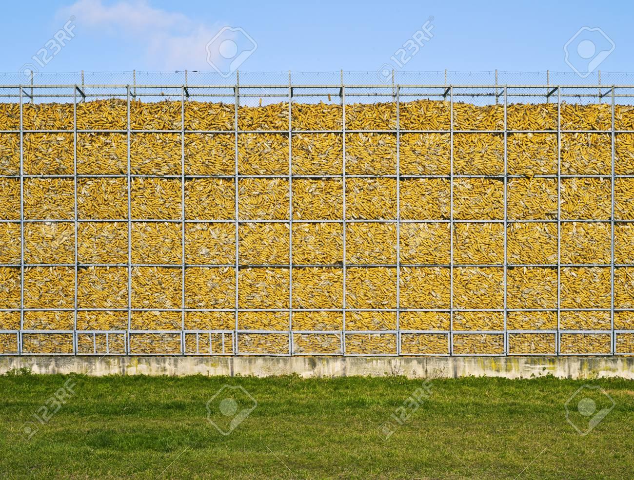 corn, wall, yellow, natural, memory Stock Photo - 18141626