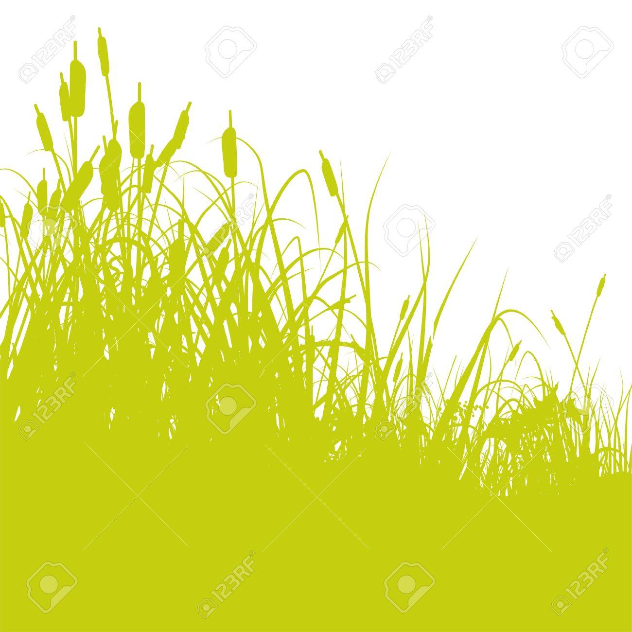Reed Stock Vector - 14981936