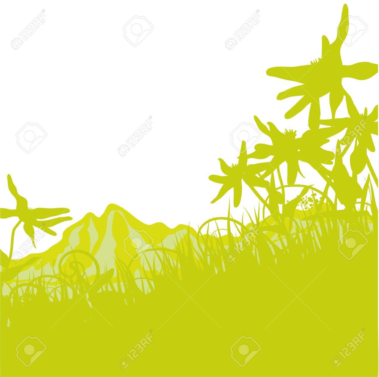 Edelweiss in the Alps Stock Vector - 17313472