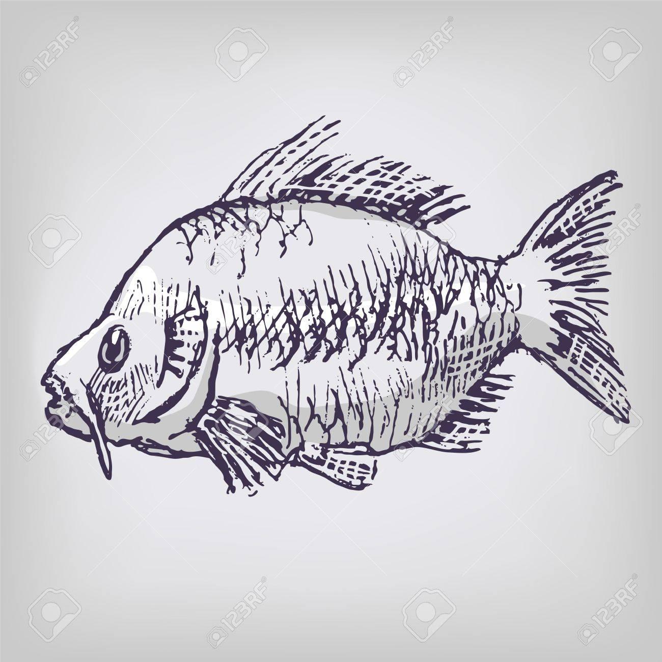 Carp and fishing Stock Vector - 18098918