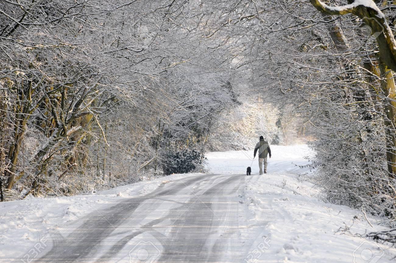 Walker Hiver Chien Marcher Le Long De La Neige Chemin De Campagne