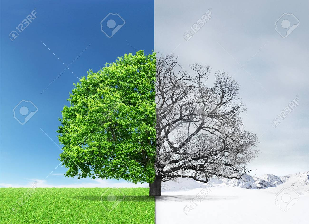 Concept of doubleness. Summer and winter of different sides with tree on the center. - 56070751