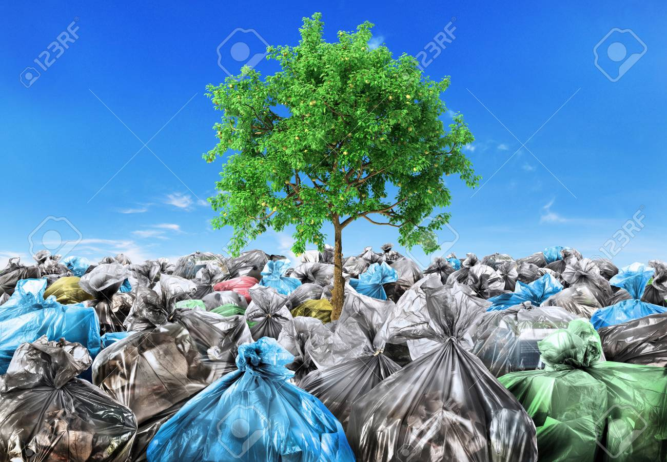 Rebirth concept. A tree grows from a pile of garbage. Recycle. - 103733562