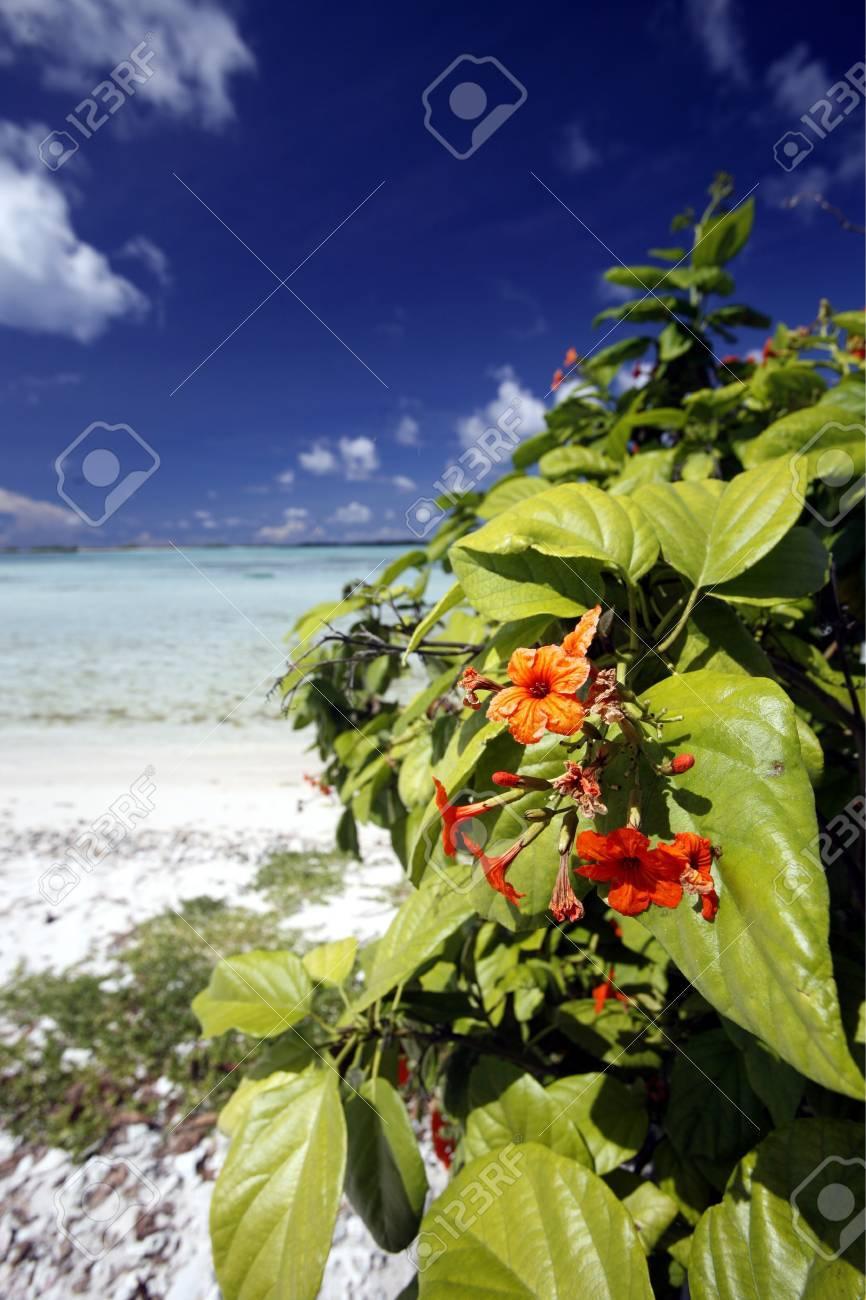 Hermosa Uñas Isla Embellecimiento - Ideas de Pintar de Uñas ...