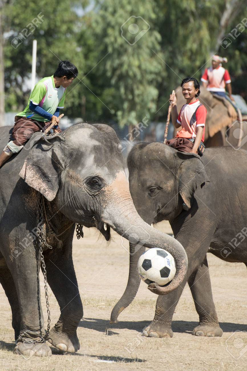 a elephant soccer game at the big Elephant show in the Stadium