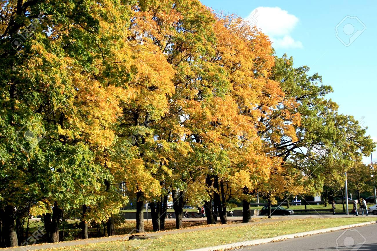 Autumn city street Stock Photo - 4651826