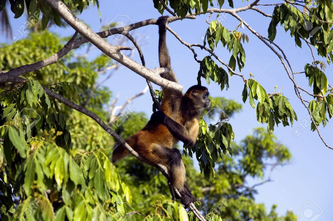 Lago Nicaragua Unas 350 Islas Grandes Y Uno De Ellos Monkey Island ...