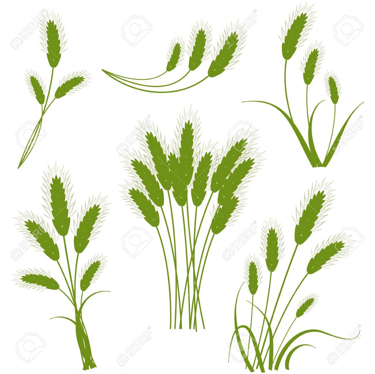 Spikes cereals - the concept of agriculture Stock Vector - 15468027