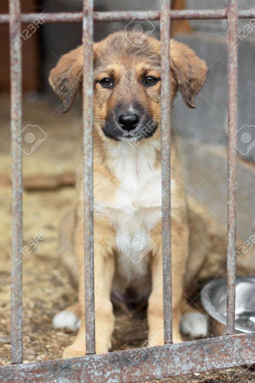 animal shelter stock photos u0026 pictures royalty free animal
