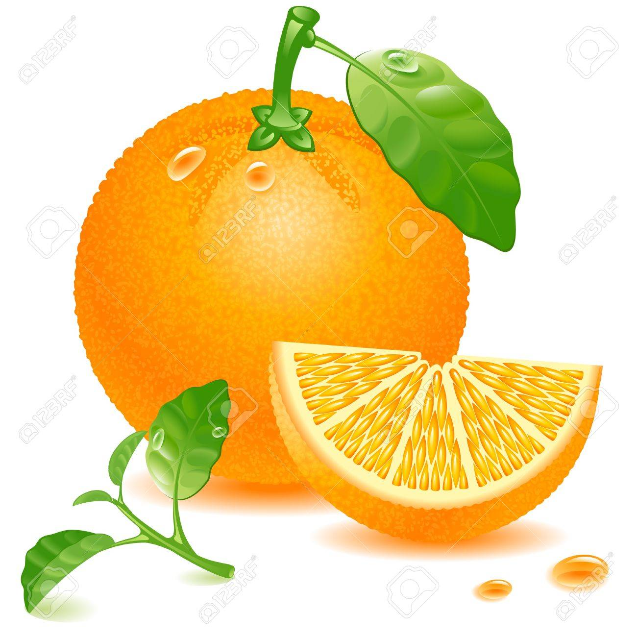 ripe orange with leaf and succulent slice isolated on white background Stock Vector - 10194977