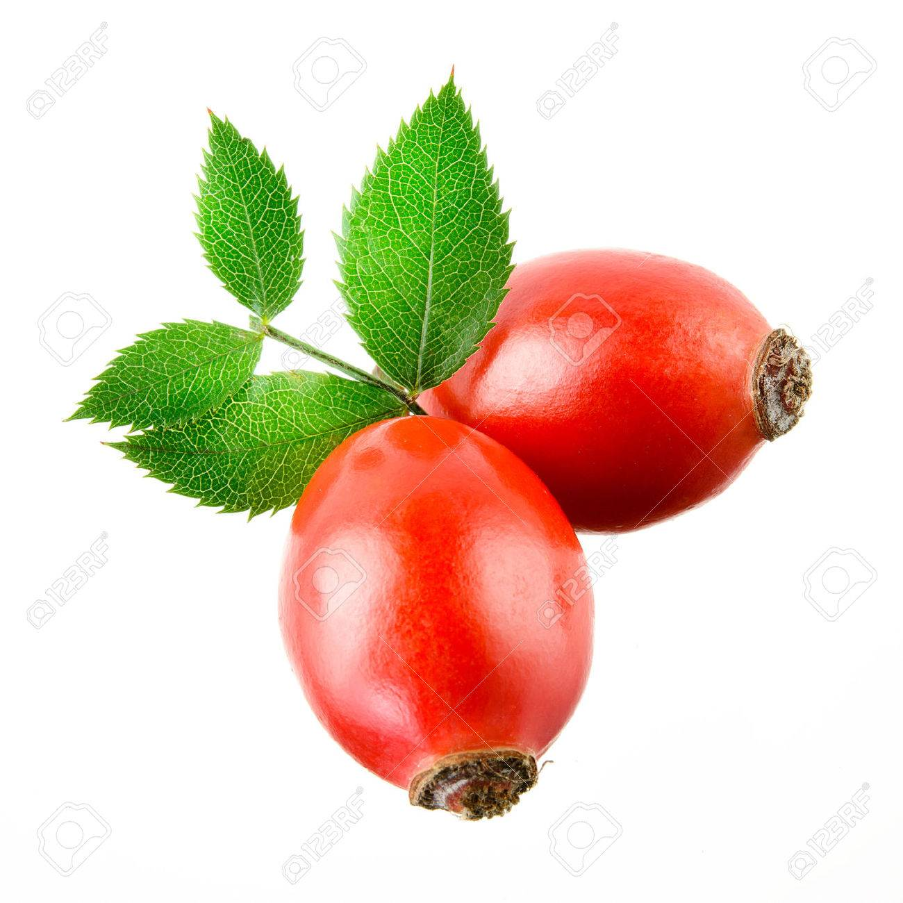 Rose hip isolated on a white background. - 25402874